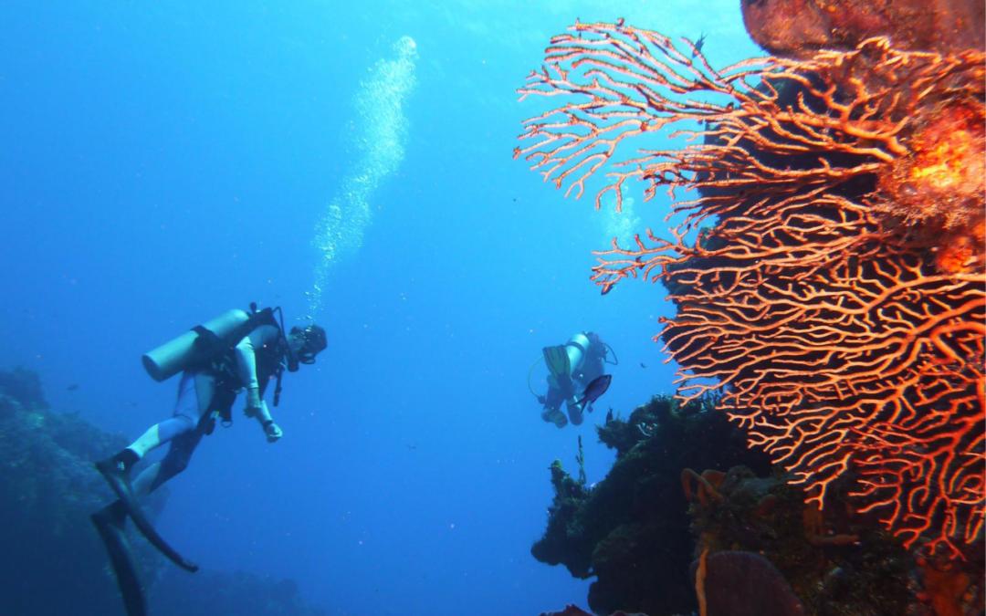[ Comprendre ] Prendre soin de son coeur en plongée sous-marine
